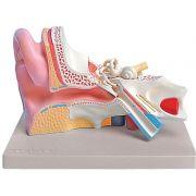 Modellino anatomico orecchio - 3 parti